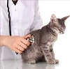 Ветеринарные клиники в Песчанокопском